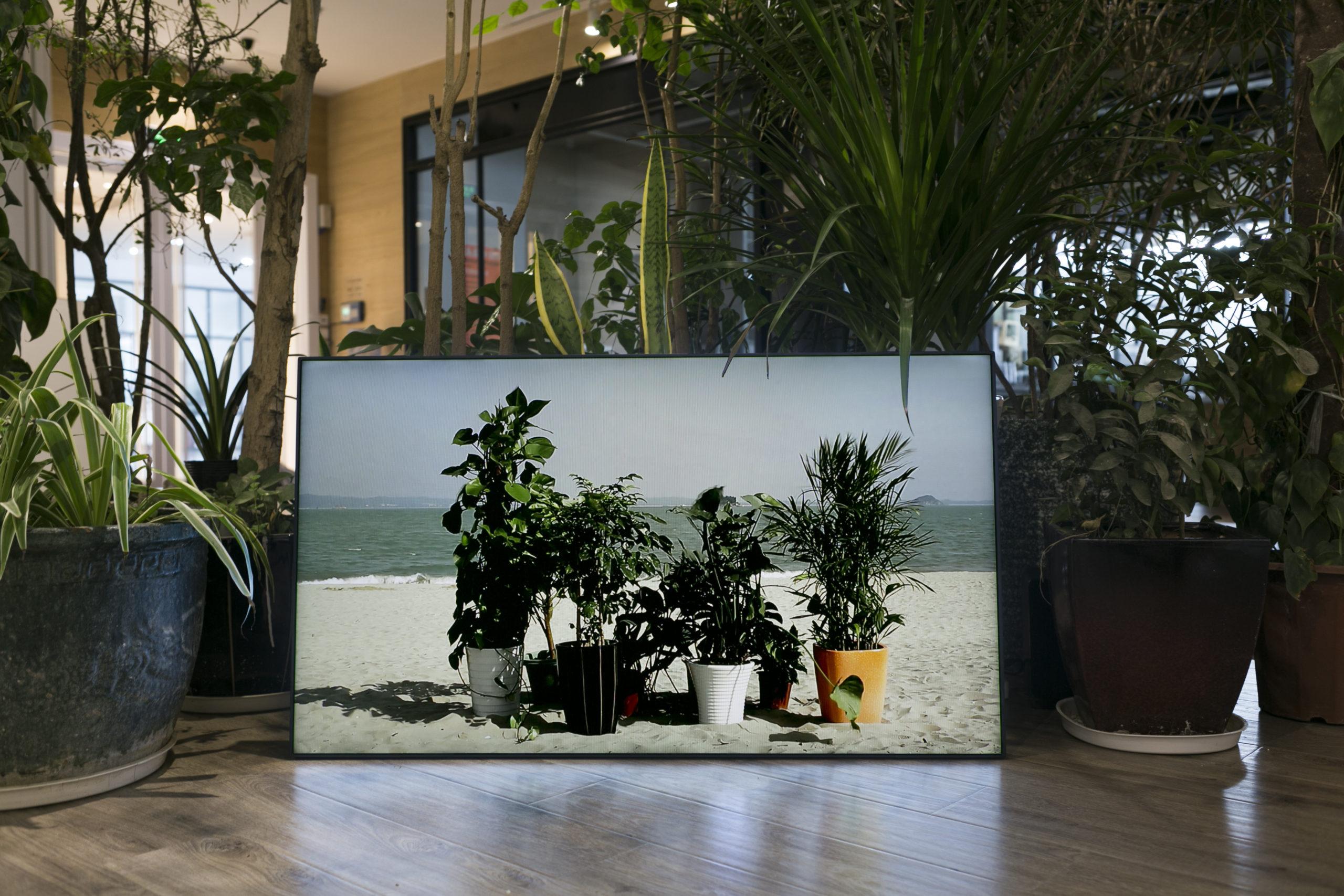 @Marie Ouazzani & Nicolas Carrier, Sandplants, 2016 - sélection 3BISF - Centre d'Art