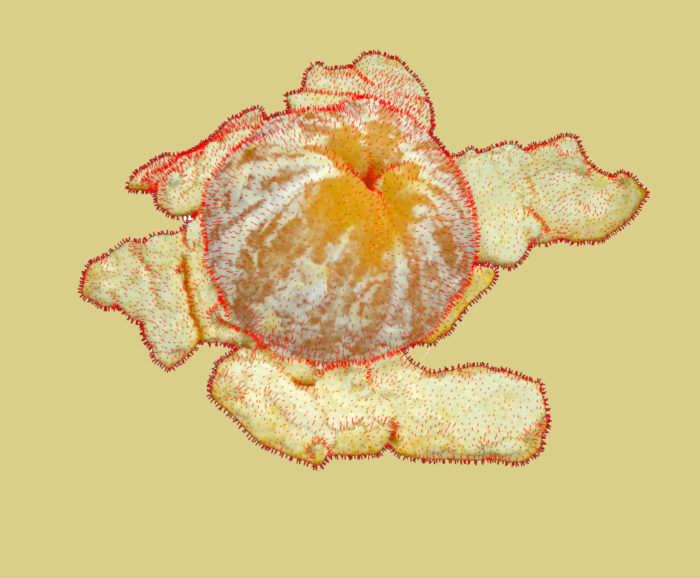@Iris Martin, 3 ways to peel an orange, 2020 - sélection Stranger Than Paradise